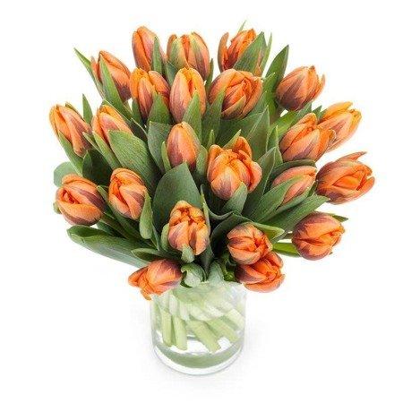 30 Tulipanów Pomarańczowych