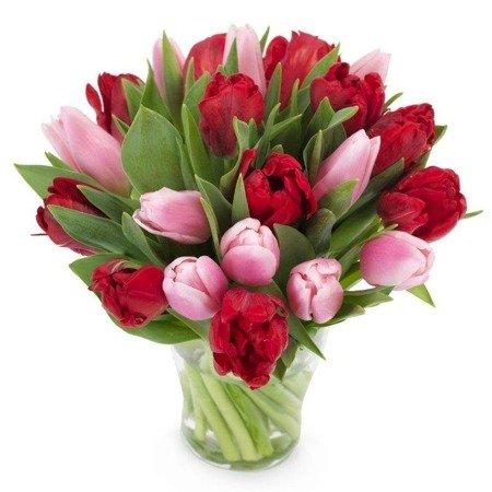 Bukiet 21 tulipanów czerwono- różowych
