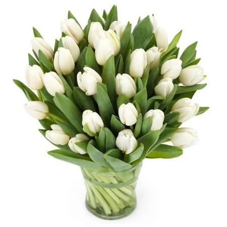 Bukiet 35 Tulipanów białych