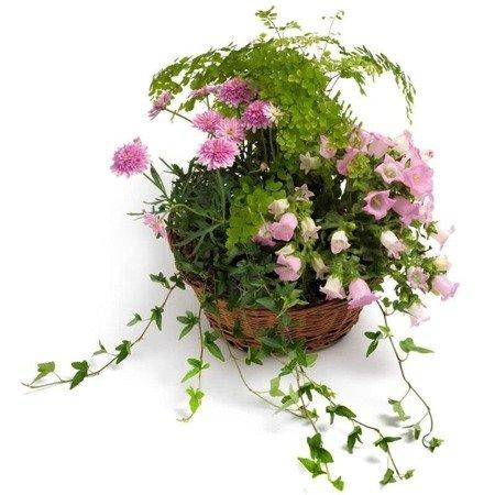 Roślinny mix w koszyku
