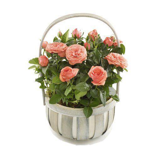Róże w koszyczku